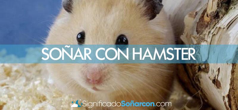Sonar con hamster