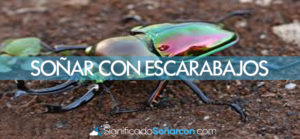 Soñar con escarabajos